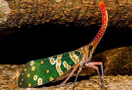Geheimnis der Symbiose von Zikaden und Ameisen – Tiergruppenseele – morphogenetisches Feld