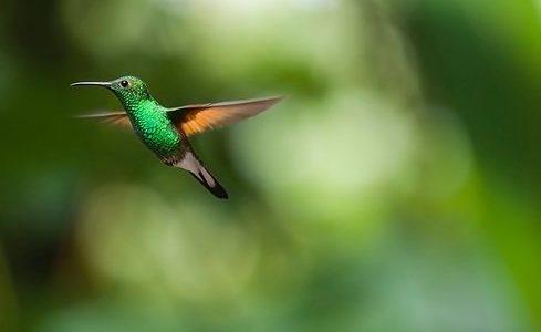 Das Wunder des Kolibris