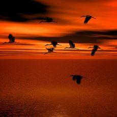 Vogelsterben durch Umweltschutz – Doppelmoral  der Umweltschützer?